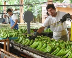 Bananeras De Uraba